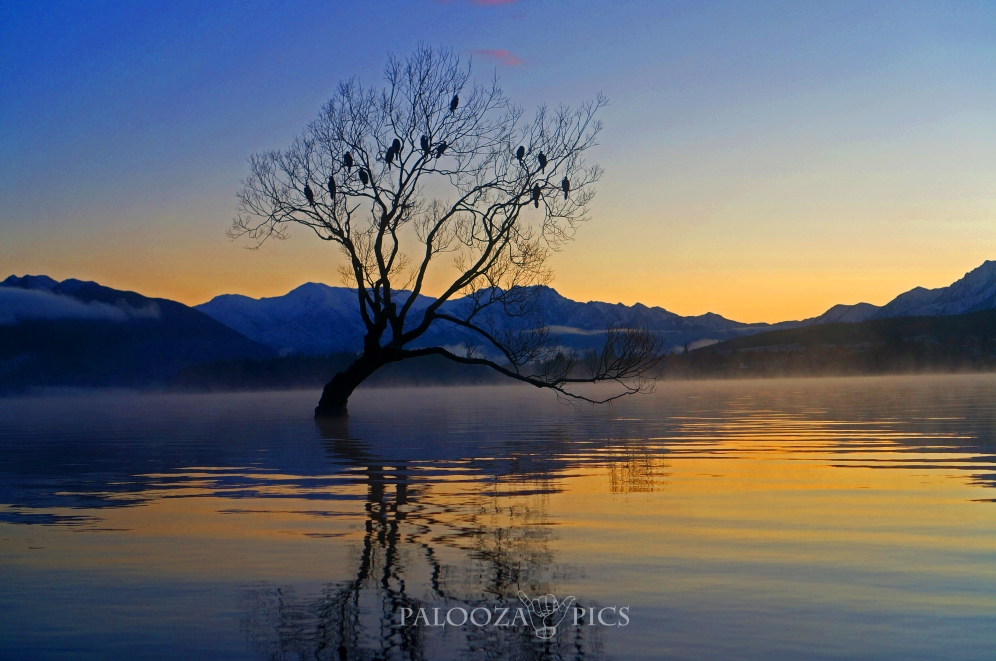 173-wanaka-tree-edit